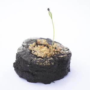 Planteringspuck - Landpuck
