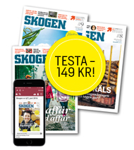 Du läser nu en artikel på Skogen.se. Vill du läsa fler kvalitativa artiklar om t.ex. virkesmarknad, skötsel och teknik? Testa 3 nummer av SKOGEN  för endast 149 kr