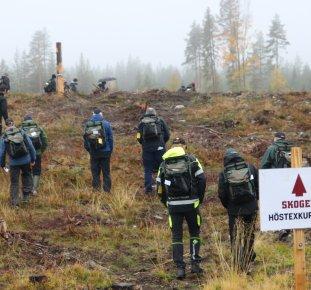 Föreningen Skogen,Höstexkursion
