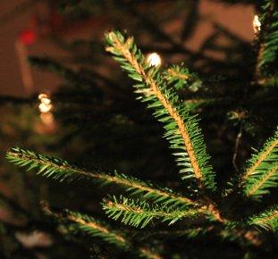 Skogssverige ger dig 132 tips för att lyckas med julgranen.