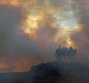 SKOGEN,skogsbränder