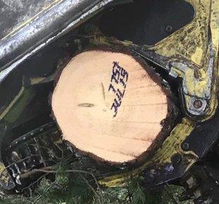 Märkning på stammens kapyta.