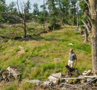 Skogsägare går med sin hund i sin skyddade skog.
