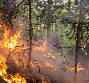 Tidningen SKOGEN, skogsbrand
