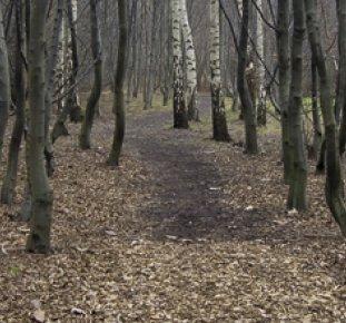 Stadsnära skog