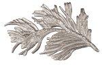 Silverkvisten