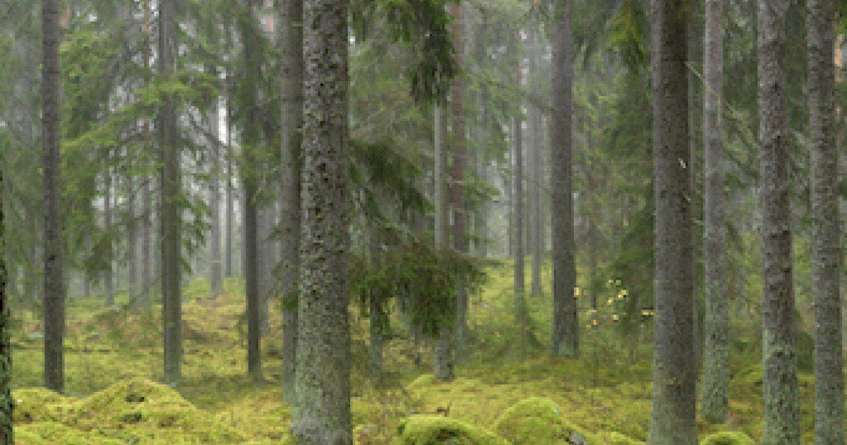 2c171992 skogsmark | Skogen