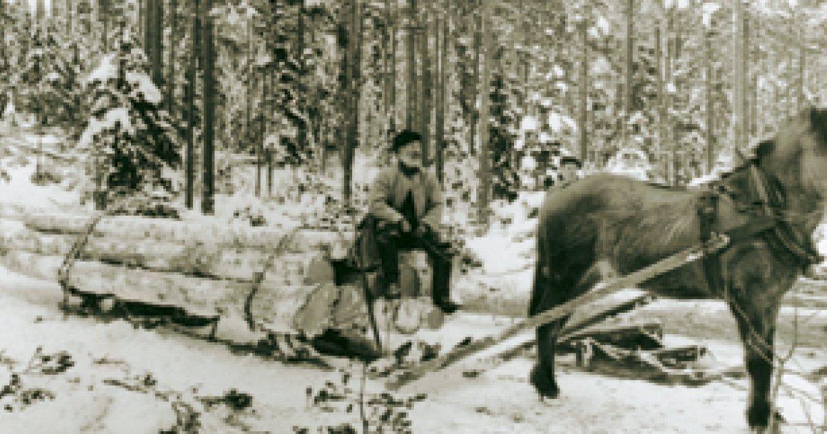 Skogshuggare Engelska