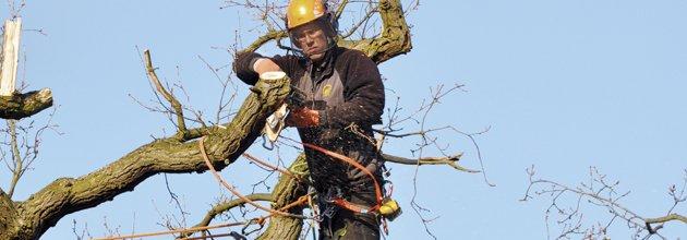 Säkerhetsfäst man högt upp i ett träd.
