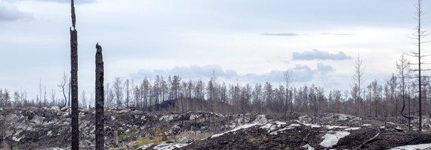 Bränd skogsmark