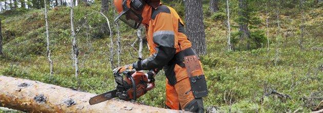 Man i sågskyddskläder ska börja såg i liggande trädstam.