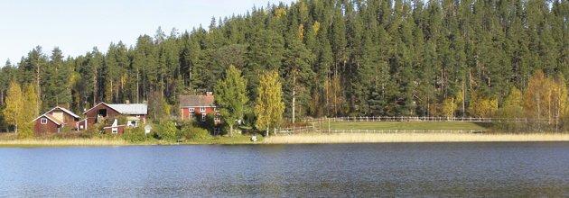 Skogsgård vid sjö