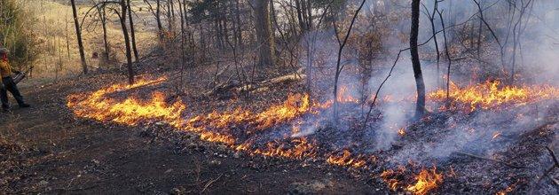 Naturvårdsbränning, markbränning i ekbestånd