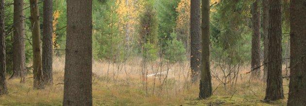 Äganderätt av skog