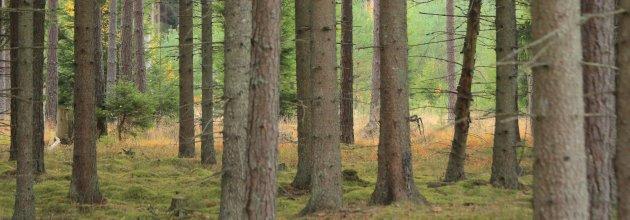 be65dce4 Ingress I Sydsverige är priserna på skogsmark nu rejält upptrissade. Köpare  får betala dubbelt så mycket för skog i Småland jämfört med i Dalarna.