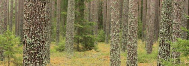 Föreningen Skogen, Tidningen SKOGEN