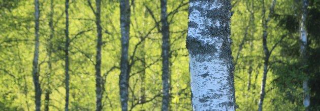 Skogsstyrelsen har delat ut pengar till 14 aktiviteter som ryms inom den regionala skogsstrategin för Småland.