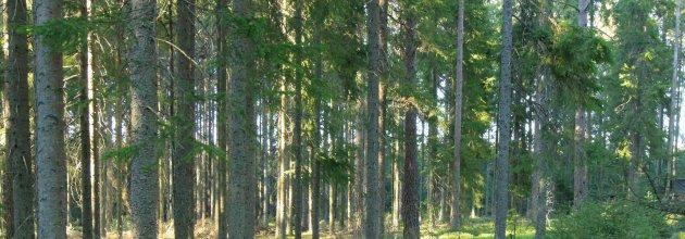 Plantering - Skogsstyrelsen