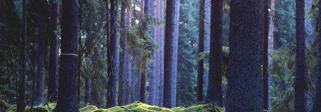 blandskog, skyddad skog