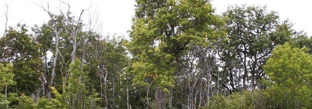 Döda träd i reservat