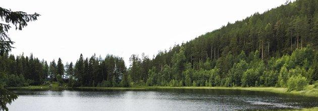Sjön Gesunden