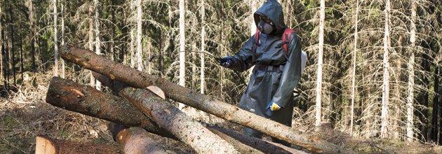 Besprutning av barkborrefälla