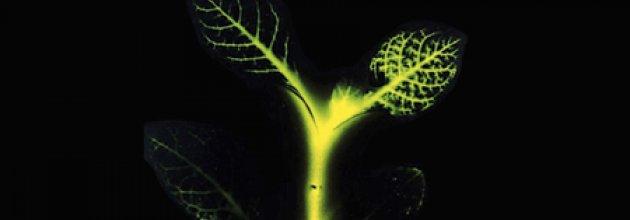 Självlysande träd
