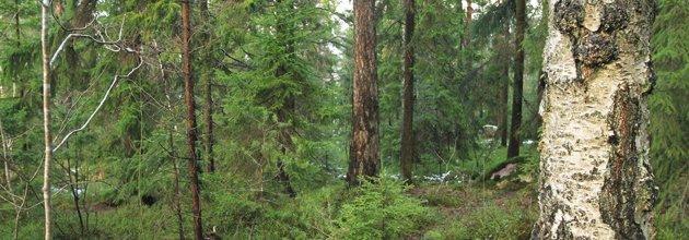 Blädningsskog