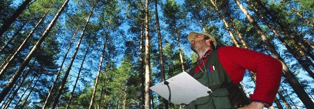 Föreningen Skogen,nationella skogsprogrammet