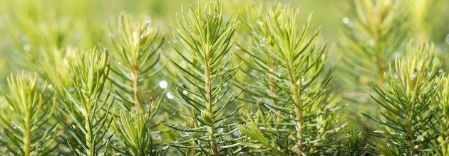 Svenska skogsplantor har under året investerat närmare 21 miljoner kronor i plantskolan i Vibytorp.