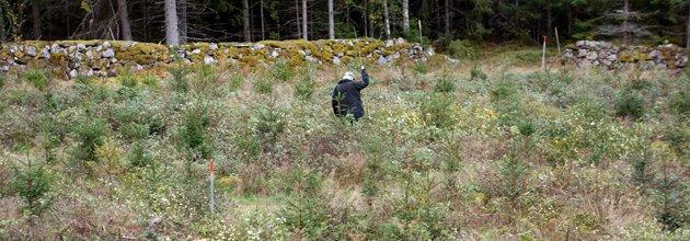 Arne bland sina skogsplantor