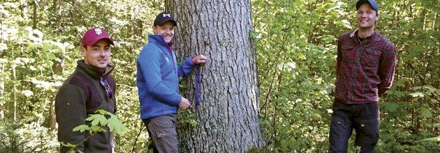Skogsmästarstudenter vid silvergranen