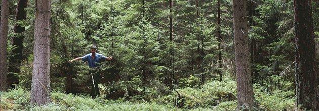 Skogsägare i blädad skog.