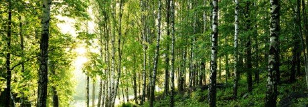 klimat,skog