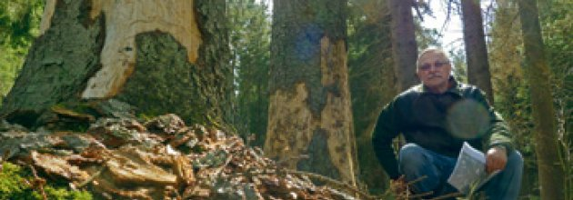 80 miljoner for fler skogsjobb