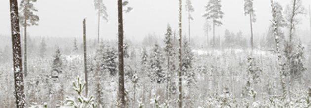 naturvårdshänsyn, kontinuitetsskogsbruk,