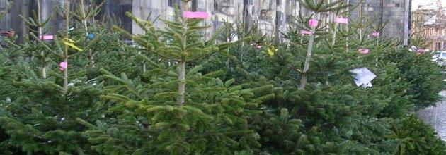 julgransförsäljning