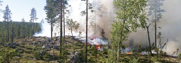 naturvårdsbränning