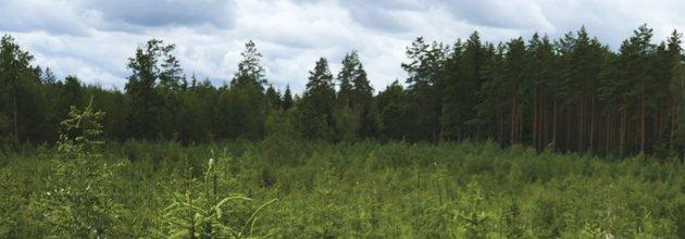 Ny skog, höstplanterat 2017