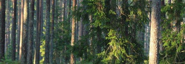 39d1e4b3 Priserna på skogsmark har fortsatt att öka, visar siffror för september.  Tydligast är det i södra Sverige där toppnoteringar uppmätts på flera håll.
