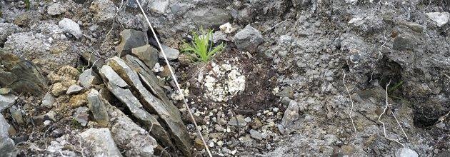 Liten tallplanta växer på marken.