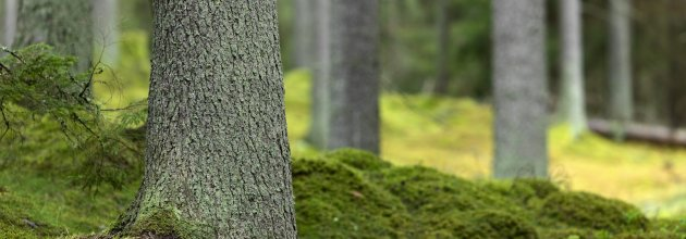 cb627119 Riksgenomsnittet för skogsmarkspriser är det högsta sedan LRF Konsult  började prismätningarna för 22 år sedan. Foto: Bosse Backström, SKOGEN-bild.