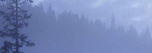 Dimmig skogssiluett