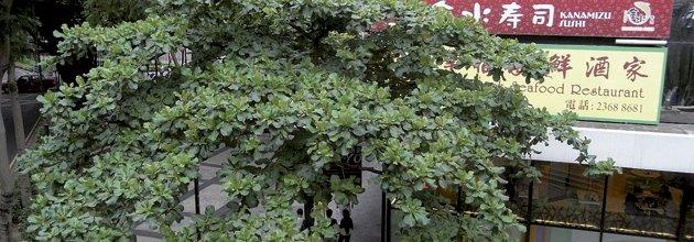 Lövträd skuggar trottoar i japansk stad.
