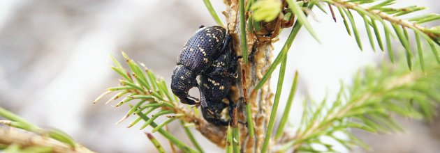 Snytbaggar