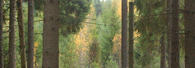 SKOGEN, hållbart skogsbruk