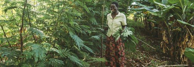 Träd i Kenya