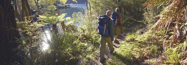 Två män vandrar på stig i regnskogen Te Urewera i Nya Zeeland.