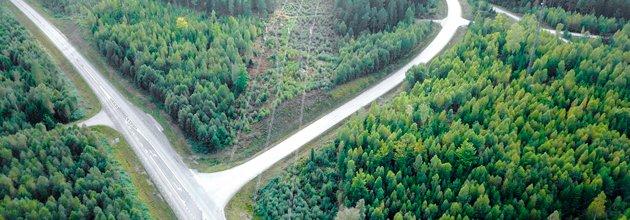 En kraftledning och två riksvägar genom skogen. Foto: Skogsstyrelsen